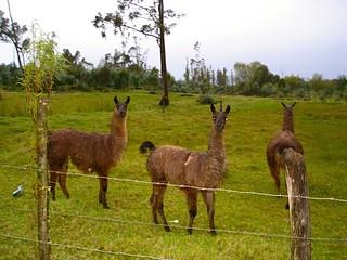 llama farmers | by GaryAScott