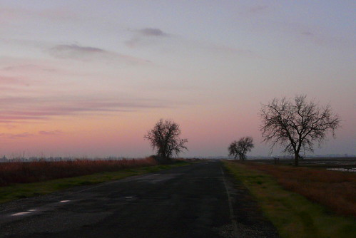 california road commute lonely norcal asphalt baretrees yubacounty