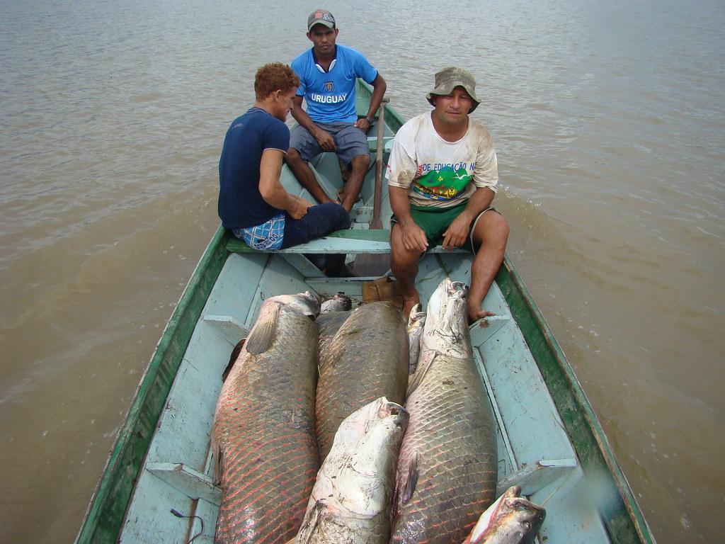 Bolsa Floresta Renda (pesca do pirarucu) - creditos Jo_o Tezza