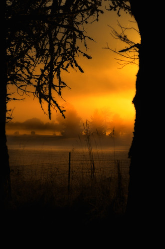 trees light shadow fog sunrise golden 1001nights sauvieisland 001nightsmagiccity