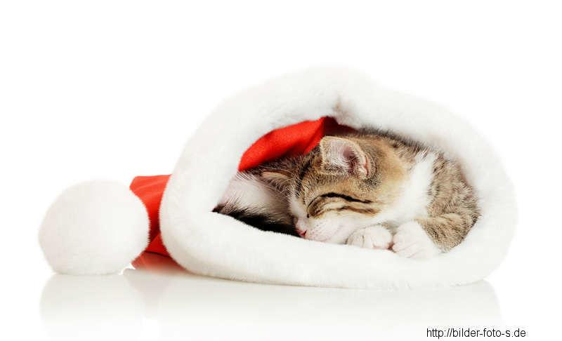 weihnachtsbilder mit katzen. Black Bedroom Furniture Sets. Home Design Ideas