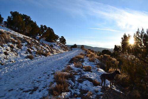 winter sunset dog animal colorado eagle zuri blm germanshorthairedpointer eaglecolorado