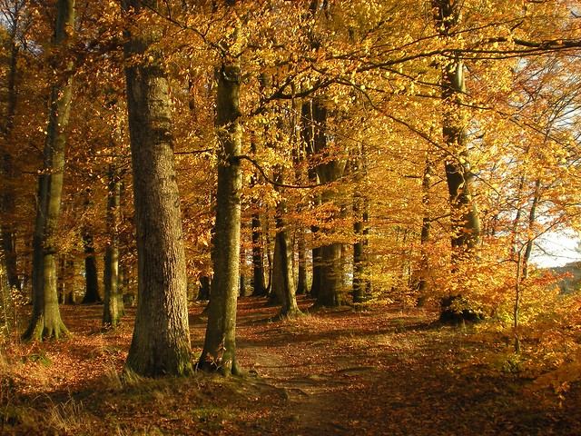 Forest Trees in Autumn