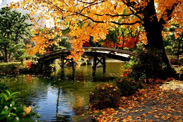 京都の秋(渉成園)/Syousei en