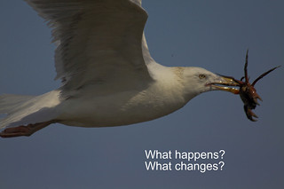 what-happens | by bgblogging