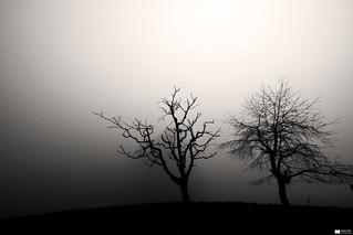 Misty Tree   by Daniel Wildi Photography