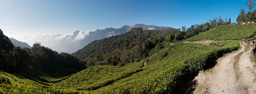 panorama india tea plantation