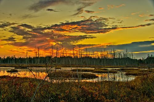 sunset landscape us washington newjersey unitedstates pinelands landescape pinebarrens jerseydevil pinebarren 5place 5places