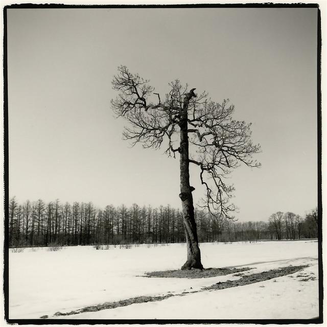 #95 Tree