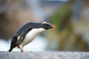MAPedrera_Penguins_5 by Miguel A. Pedrera