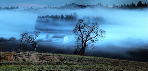 blue winter sunset mist canada weather fog landscape day bc farm vancouverisland sidney