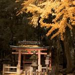 Autumn Serene #2 春日の秋