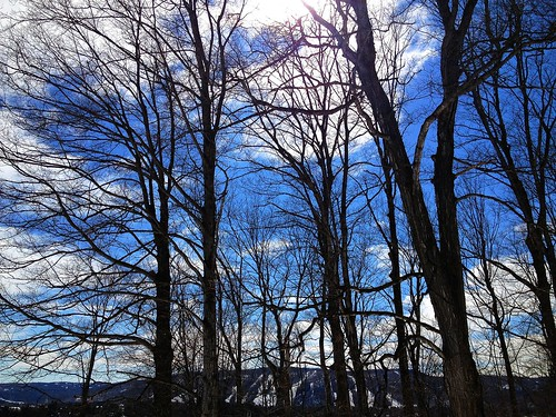 trees winter sunlight nature landscape outdoor uploaded:by=flickrmobile flickriosapp:filter=nofilter lepetitclocherbb