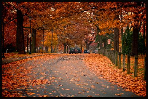 fall portland nikon maine foliage d200 2011 deeringpark