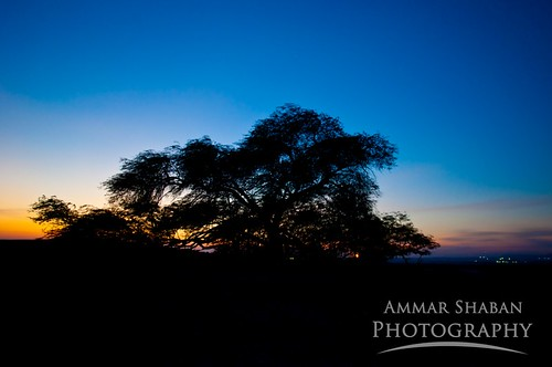 sunset sky sun tourism nature silhouette clouds bahrain niceshot desert sightseeing treeoflife