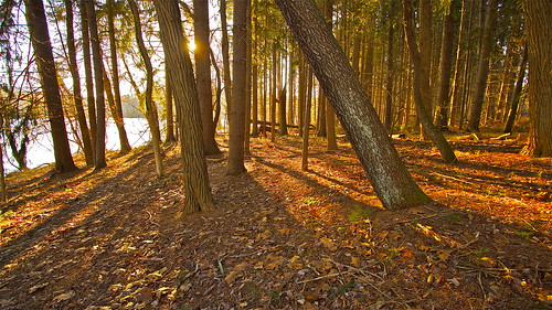 trees light shadow forest sunrise woods floor
