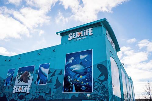 SeaLife Aquarium Great Lakes Crossing | Does anybody else ...