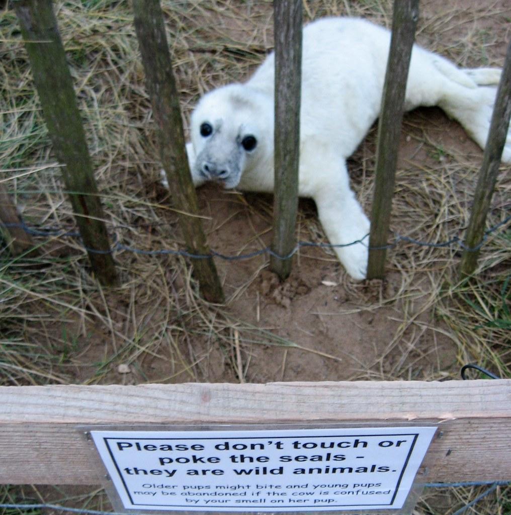 pets and animal adoption