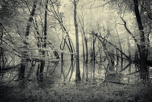 morning fog blackwhite potawatomiwoods canoneos6d canonef1635f4lisusm