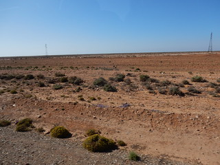 l'indigo pousse dans le désert | by Waynuma