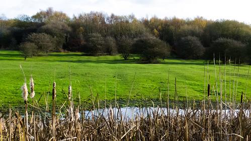 Ridge and furrow field, Fens Pool LNR