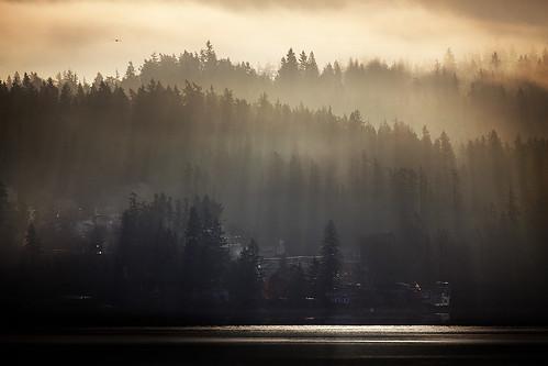 seattle trees lake fog sunrise landscape washington december foggy earlymorning redmond pacificnorthwest wa washingtonstate brouillard lakesammamish 2011 marymoorpark 300mm28l ef300mmf28lisusm 5dmkii