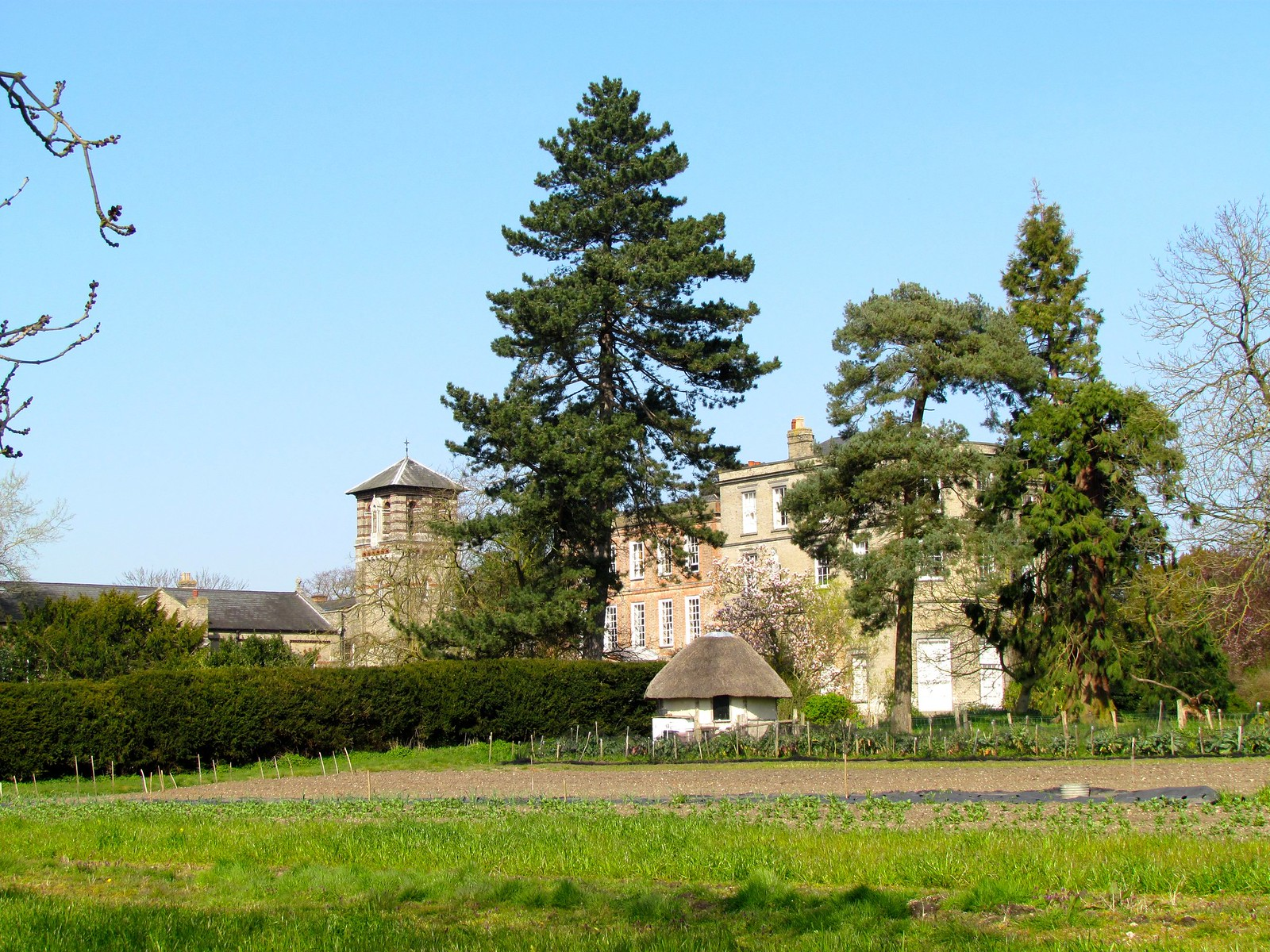 photo from walk Old Hall, East Bergholt