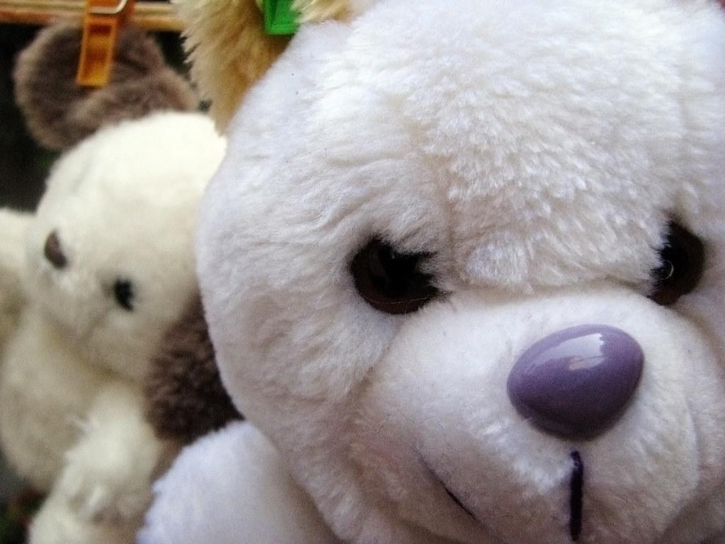 Angry teddy bear
