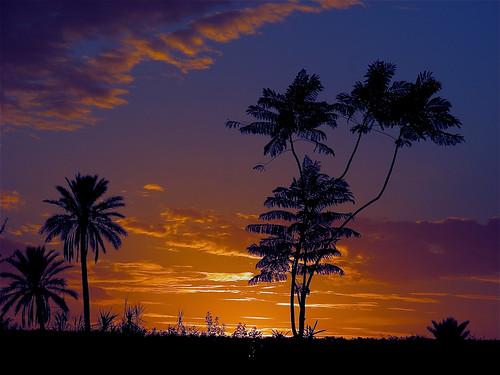 SOLEIL D'AUTOMNE sur LA PALMERAIE**EXPLORE#85 du 23/12