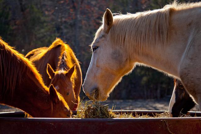 Horses 9798