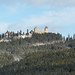 Cestou na Kašperk z Kašperských Hor, foto: Petr Nejedlý