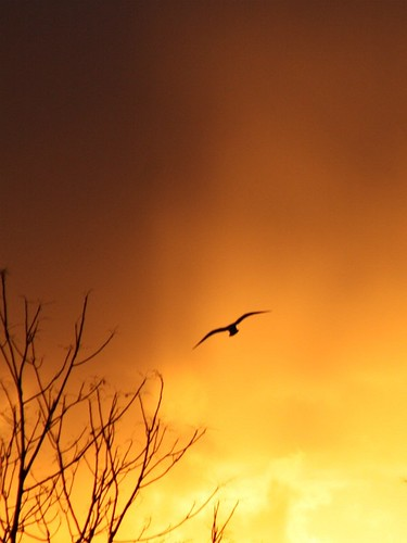 winter light sun ny newyork clouds sunrise seagull gull january larchmont virga abigfave flickraward newphotodistillery