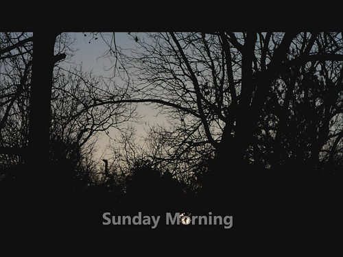 morning tree sunrise video squirrel sunday nx200