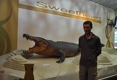 """""""Sweetheart"""", cocodrilo gegant disecat. El van matar sense voler quan l'intentaven capturar."""