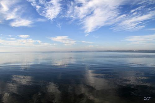 usa pelicans birds texas lagoon lamar seabirds americanwhitepelican texasstatepark pelecanuserythrorhynchos aransasbay gooseislandstatepark canon7d canon18135is zeesstof
