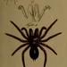 Die Arachniden : Getreu nach der Natur abgebildet und beschrieben bd.1-4 (1831), plates 1-144