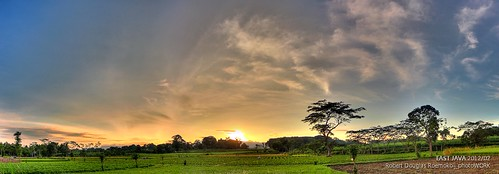 morning urban panorama green field rural canon indonesia landscape paddy hdr eastjava 600d sigma1530f3545exdg