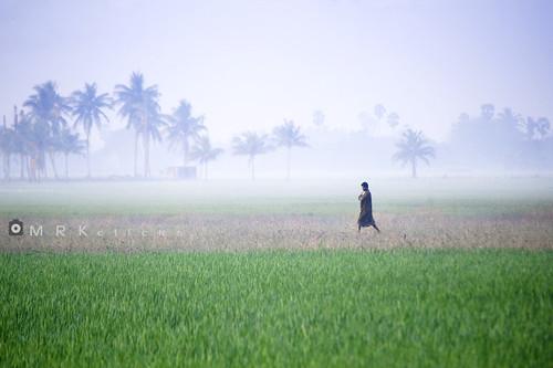 morning blue mist green fog nikon paddy walk single fields lush timing cwc mrk manwalking vengaivasal madambakkam chennaiweekendclickers mrkclicks enroutevengaivasal