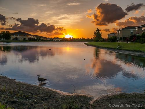 blue sky orange lake nature yellow clouds sunrise reflections pond fav50 ducks 100v10f fav20 g5 sunrises skyscapes fav30 aroundtheyard fav10 views500 views700 views200 views600 views400 views300 fav40 millerville lizasgarden cloudsstormssunsetssunrises sunsetmadness sunsetsniper
