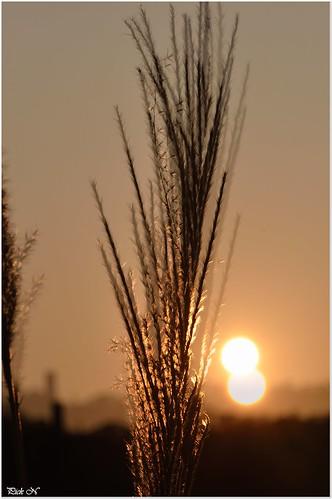 sunset soe supershot flickraward d7000 micro105mmf28gifed