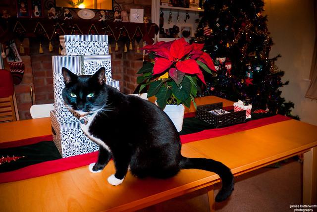 Gizmo's Christmas