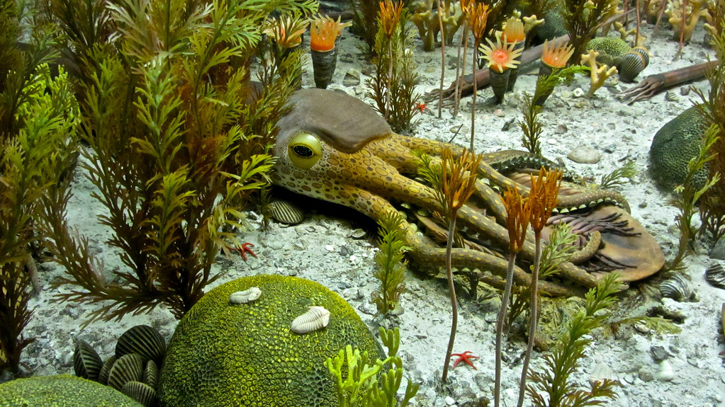 Ordovician Period diorama | key to diorama is here www.flick… | Flickr