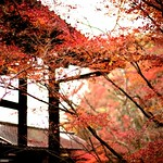 モミジの永観堂 Autumn is all Enkando