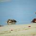 Kangaroo Island, foto: Vlastimil Tichý