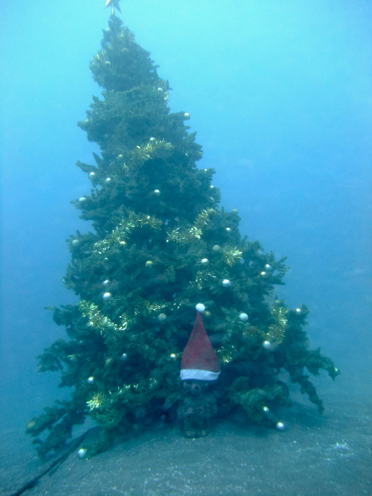 Underwater Christmas Tree With Winnie The Pooh 星見切れてた Orz