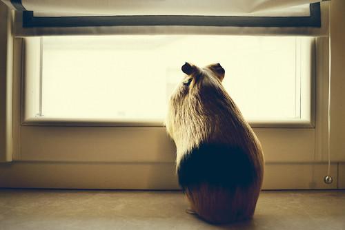 Rear Window | by Giulia van Pelt
