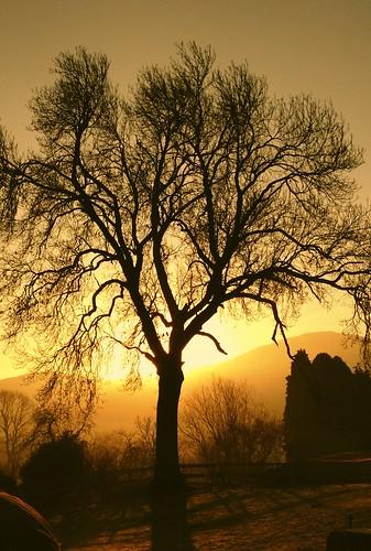tree sunrise 4s iphone