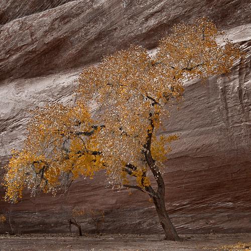Golden Fleece | by Mike.D.Green