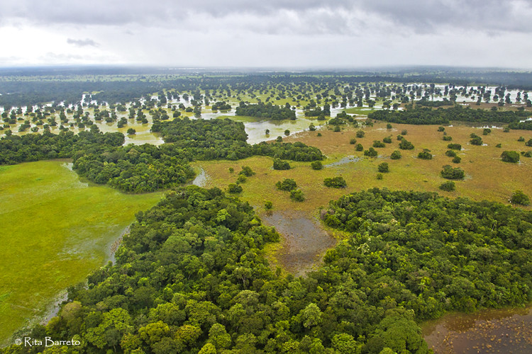 Pantanal na Cheia