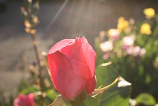 flower-spirituality-synergybyjasmine | by Synergy by Jasmine